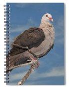 Pink Pigeon Spiral Notebook