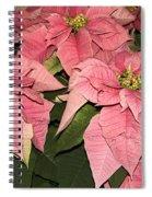 Pink Poinsettias Close-up Spiral Notebook