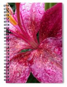 Pink Rain Speckled Lily Spiral Notebook