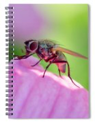Pink Reflection On Flies Body. Spiral Notebook