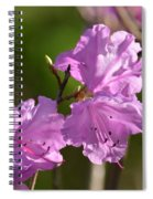 Pink Rhododendrons Spiral Notebook
