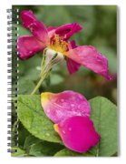 Pink Rose And Its Petals Spiral Notebook