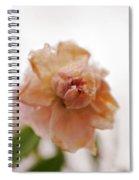 Pink Rose In Snow Spiral Notebook
