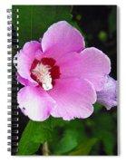 Pink Rose Of Sharon 2 Spiral Notebook