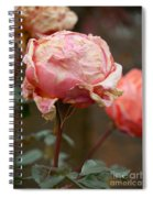 Pink Roses In The First Snow Spiral Notebook