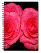 Pink Roses With Colored Edges Effects Spiral Notebook