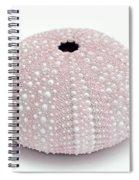 Pink Sea Urchin White Spiral Notebook