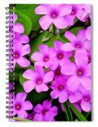 Pink Sorrel Spiral Notebook