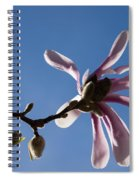 Pink Spring - Blue Sky And Magnolia Blossoms Spiral Notebook