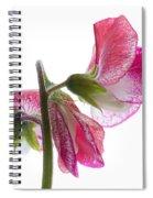 Pink Sweet Pea Spiral Notebook