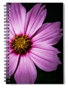 Pink Tickseed  Spiral Notebook