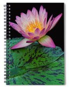 Pink Tipped Beauty Spiral Notebook
