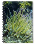 Pink Tipped Giant Sea Anemone Spiral Notebook