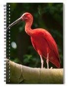 Pink Tropical Bird Spiral Notebook