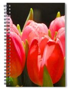 Pink Tulips In A Row Spiral Notebook