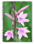 Pink Watsona  Spiral Notebook