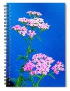 Pink Yarrow Spiral Notebook