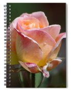 Pink Yellow Rose 01 Spiral Notebook