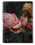 Pink Roses In The First Snow I V Spiral Notebook