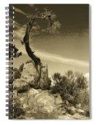 Pinon Pine Spiral Notebook