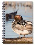 Pintail Drake Taking A Break Spiral Notebook