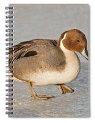 Pintail Duck Spiral Notebook