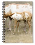 Pinto Mare And Filly Spiral Notebook