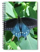 Pipevine Swallowtail Spiral Notebook