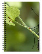 Pipevine Swallowtail Mother With Eggs Spiral Notebook
