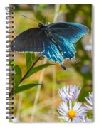 Pipevine Swallowtail On Asters Spiral Notebook