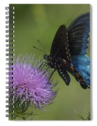 Pipevine Swallowtail Visiting Field Thistle Din158 Spiral Notebook
