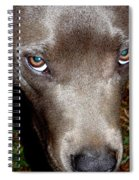 Pit Bull - 1 Spiral Notebook