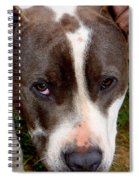 Pit Bull - 2 Spiral Notebook