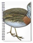 Plains Wanderer  Spiral Notebook