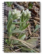 Plantain-leaved Pussytoes Wildflowers - Antennaria Plantaginifolia Spiral Notebook