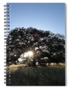 Plateau Oak Tree Spiral Notebook