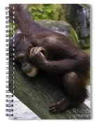Play Day Spiral Notebook