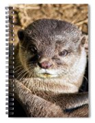 Play Time For Otters Spiral Notebook