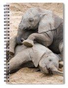 Playful Elephant Calves Spiral Notebook