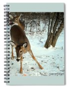 Playful In The Snow Spiral Notebook
