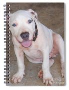 Playful Pitbull Puppy Haaweo Spiral Notebook