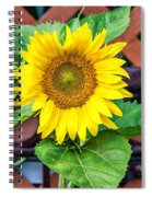 Playful Spiral Notebook