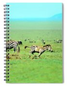 Playfull Zebras Spiral Notebook