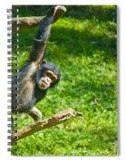 Playing Chimp Spiral Notebook