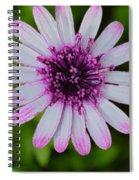 Pleasing Beauty Spiral Notebook