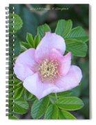 Pleasing Pink Spiral Notebook