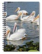 Plenty Of Pelicans Spiral Notebook