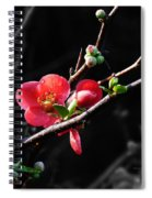 Plum Blossom 3 Spiral Notebook