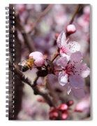 Plum Blossoms 12 Spiral Notebook