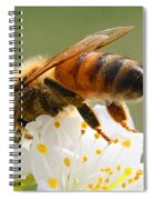 Plum Full Of Bees Spiral Notebook